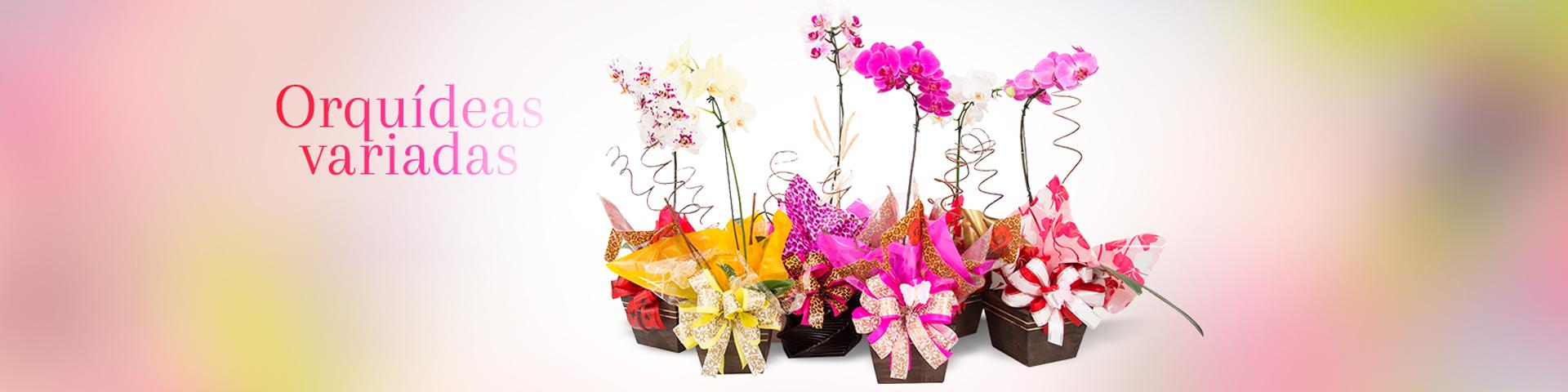 Topo Orquideas variadas