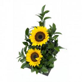 Arranjo de Flores Girassol carinhoso