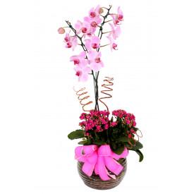 Vaso Plantado Jardim de Orquídeas