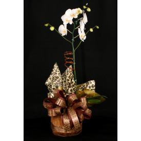 Vaso Plantado Safari de luxo