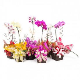 Vaso Plantado Orquídea Variada
