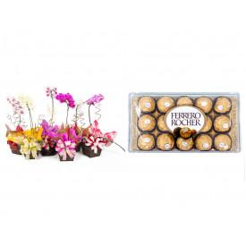 Vaso Plantado Orquídea Variada + Ferrero Rocher