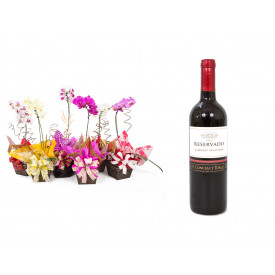 Vaso Plantado Orquídea Variada + Vinho Concha Y Toro