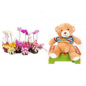 Vaso Plantado Orquídea Variada + Urso Carinhoso
