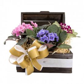 Vaso Plantado Jardim de Violetas