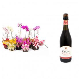 Vaso Plantado Orquídea Variada + Vinho Frisante Cella Lambrusco Tinto 750ml