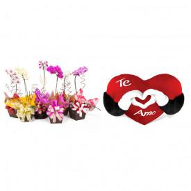 Vaso Plantado Orquídea Variada + Coração Te Amo 40cm