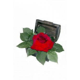 Arranjo de Flores Amor natural