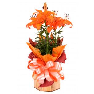 Vaso Plantado Sinal de amor eterno