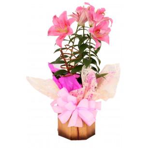 Vaso Plantado Sinal de Carinho