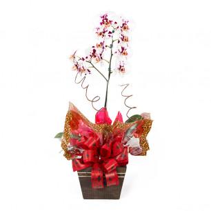 Vaso Plantado Delicada e exótica