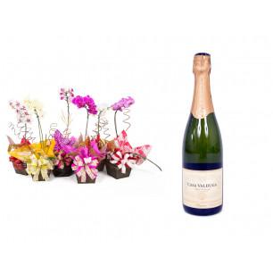 Vaso Plantado Orquídea Variada + Espumante Casa Valduga