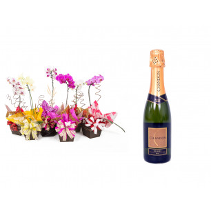 Vaso Plantado Orquídea Variada + Espumante Chandon Brut