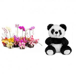 Vaso Plantado Orquídea Variada + Urso Panda 25cm